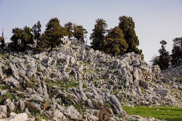 Landschap van bos in hooglanden in turkije