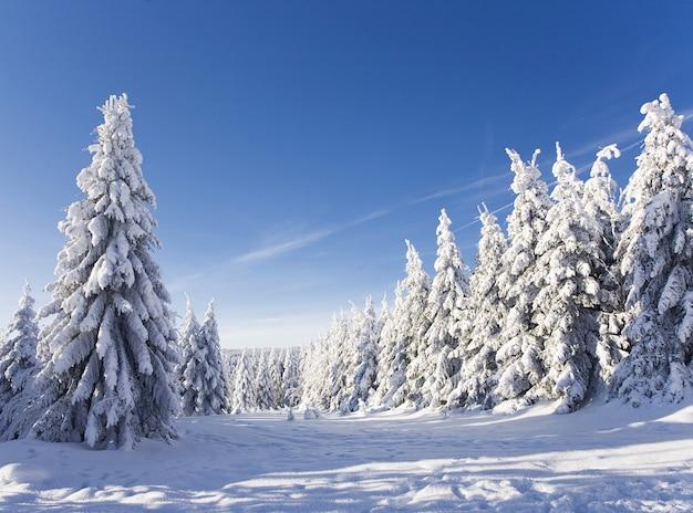Landschap van de bergen bedekt met sneeuw