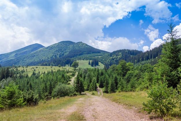 Landschap van de bergen van de karpaten met voetpad, firtrees en hemel