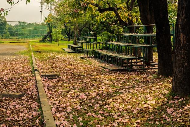 Landschap van de boom en de oude tribune aan de zijkant van het veld