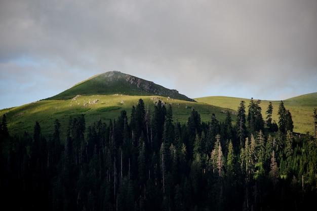 Landschap van de heuvel bedekt met groen gras op de voorgrond van groenblijvende bossen