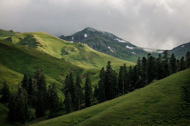 Landschap van de heuvels met de bomen en bewolkte hemel