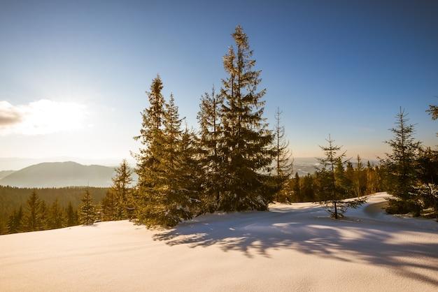 Landschap van dicht bos dat groeit op besneeuwde heuvels tegen een achtergrond van blauwe lucht en witte wolken