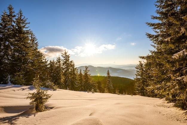 Landschap van dicht naaldbos dat groeit op besneeuwde heuvels tegen een achtergrond van blauwe lucht
