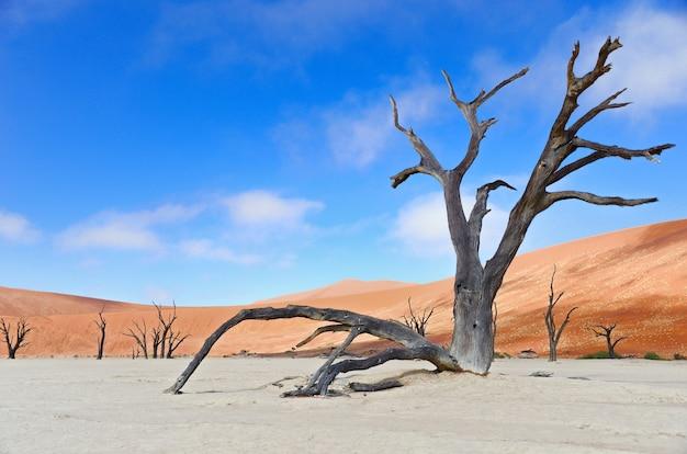 Landschap van dode vlei, sossusvlei, namib-woestijn, namibië, zuid-afrika