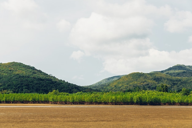 Landschap van eb met groene berg, wolkenhemel en mangrovebos op uitloper bij toong prongebaai in chon buri, sattahip-district, thailand.