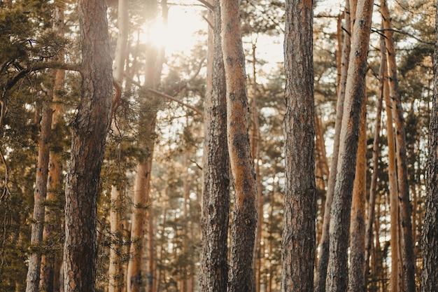 Landschap van een bos bedekt met bomen onder het zonlicht in de herfst