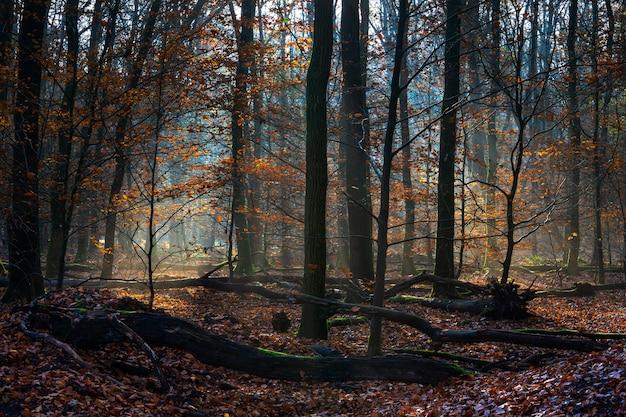 Landschap van een bos bedekt met droge bladeren en bomen onder het zonlicht in de herfst