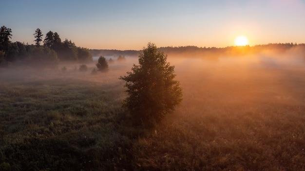 Landschap van een eenzame boom in de mist vroeg in de ochtend