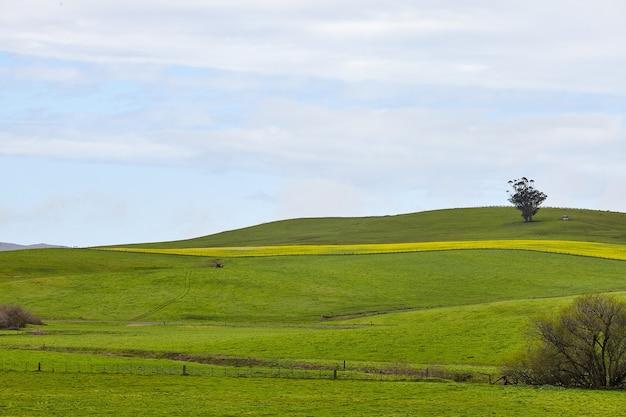 Landschap van een glooiend boerderijland onder de heldere hemel in petaluma, californië, vs.