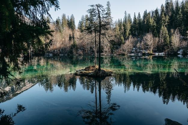 Landschap van een meer omgeven door bossen met bomen die reflecteren op het water onder het zonlicht