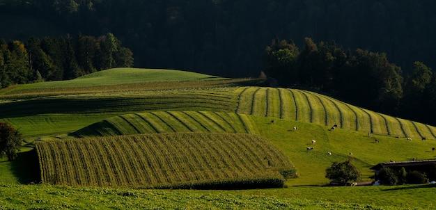 Landschap van een veld