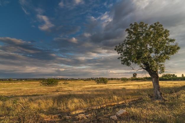 Landschap van gedroogd gras en boom op het veld onder een bewolkte hemel