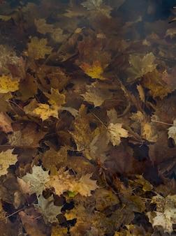 Landschap van gevallen bladeren van esdoorn drijvend op het wateroppervlak