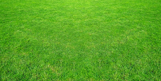 Landschap van grasgebied in groen openbaar parkgebruik als natuurlijke achtergrond. groene grastextuur van een gebied.