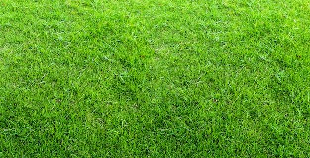 Landschap van grasgebied in groen openbaar parkgebruik als natuurlijke achtergrond of achtergrond. groene grastextuur van een gebied.