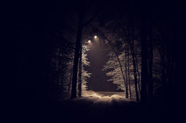 Landschap van griezelig winter forest vallende sneeuw