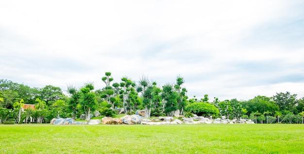 Landschap van groen gras en groep bonsai boom