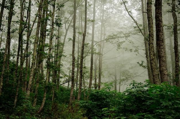 Landschap van het diepe bos bedekt met mist