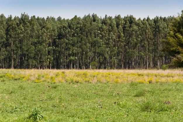 Landschap van het platteland in de kleuren geelgroen