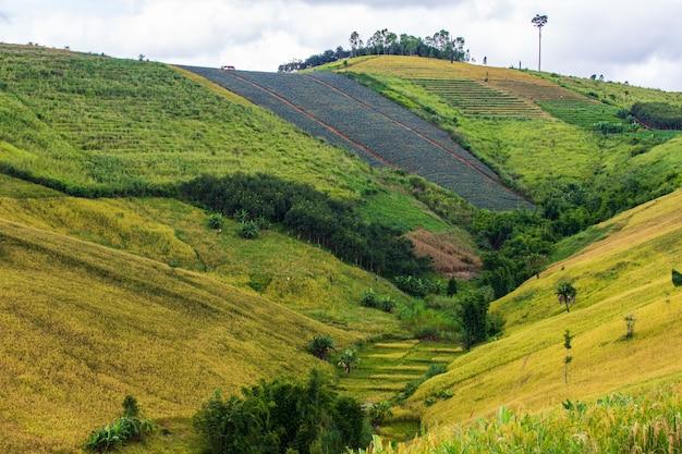 Landschap van padieveld in het platteland van thailand.