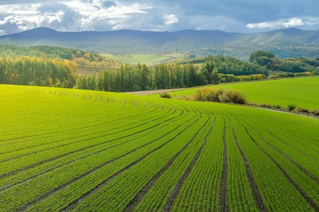 Landschap van platteland heuvels met rijst veld boerderij, bos en berg in de herfst