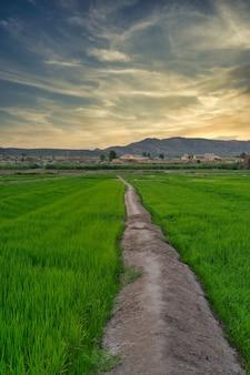 Landschap van rijstvelden in calasparra murcia