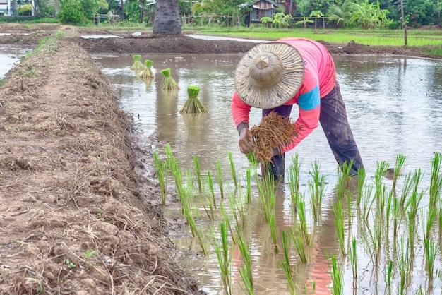 Landschap van rijstvelden met plattelandsbevolking