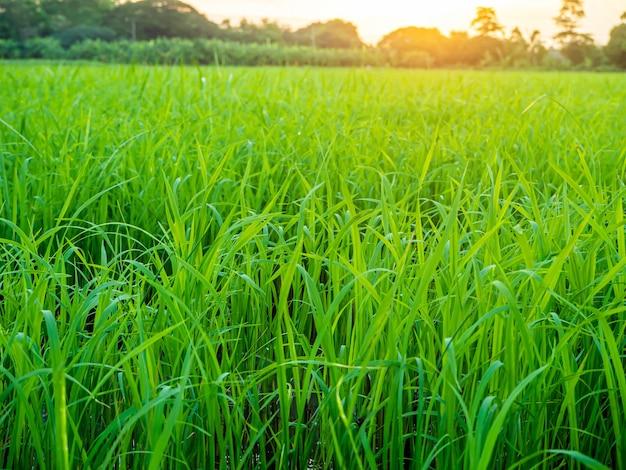Landschap van suset met groene velden
