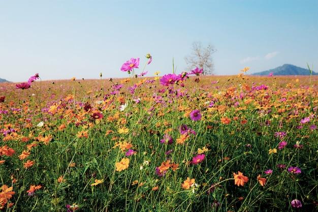 Landschap van veld met blauwe hemel