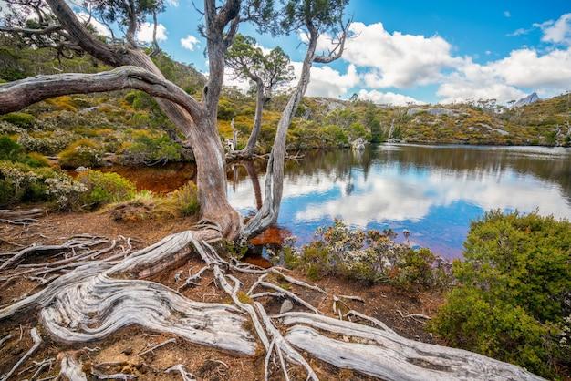 Landschap van wiegberg tasmanige, australië.