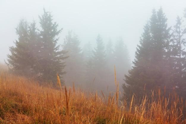 Landschappen in de late herfst. mistig bos het de ochtend