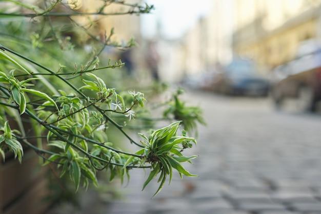 Landschapsarchitectuur en decoratie van stadsstraten, planten in bloempotten
