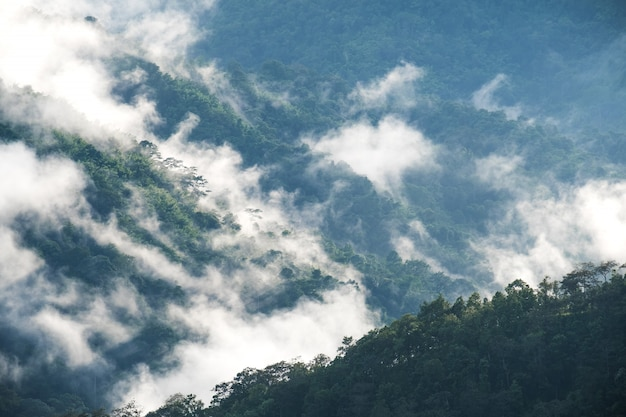 Landschapsbeeld van de heuvels van het groenregenwoud in mistige dag met blauwe hemel