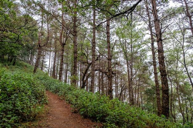 Landschapsbeeld van groen regenwoudbossen