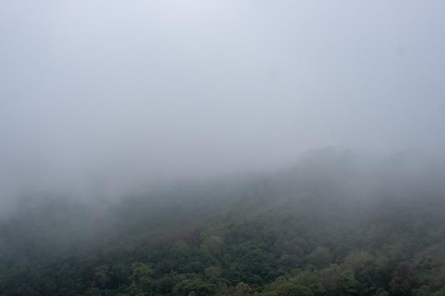 Landschapsbeeld van groenregenwoud en heuvels op mistige dag