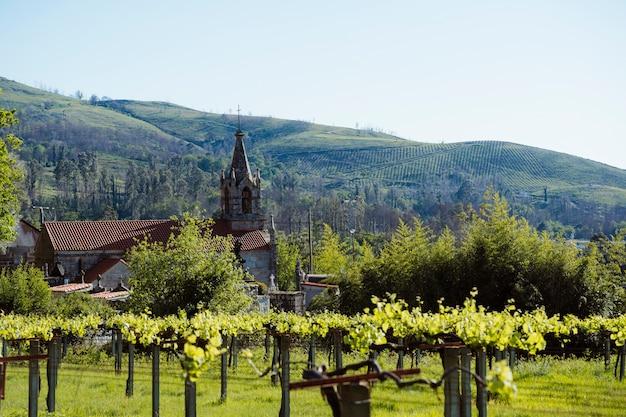 Landschapslandschapsmening met groene wijngaard in de zomertijd. natuur, reizen en vakanties concept. panoramisch uitzicht op de prachtige kerk op kleine spaanse dorp. landschap in het noorden van spanje, galicië.