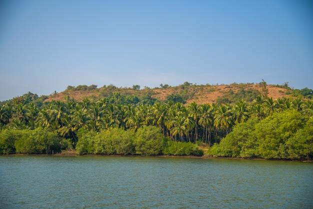 Landschapsmening van backwaters met kokospalmen en mangrovebossen in goa, india.