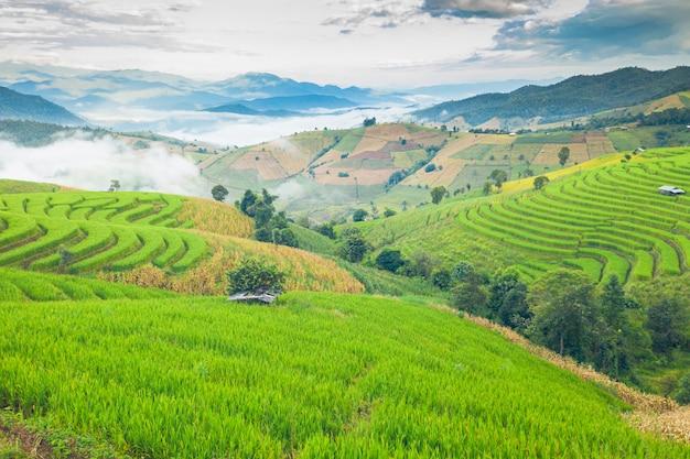Landschapsmening van de berg en rijstterrassen in noordelijk, thailand, luchtmening
