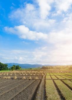 Landschapsmening van een vers groeiende landbouwgroente