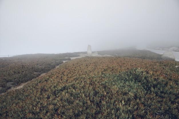 Landschapsmening van groen gras met steentribune in cabo da roca