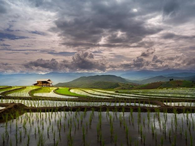 Landschapsmening van rijstterrassen en hut in chiang mai, thailand.