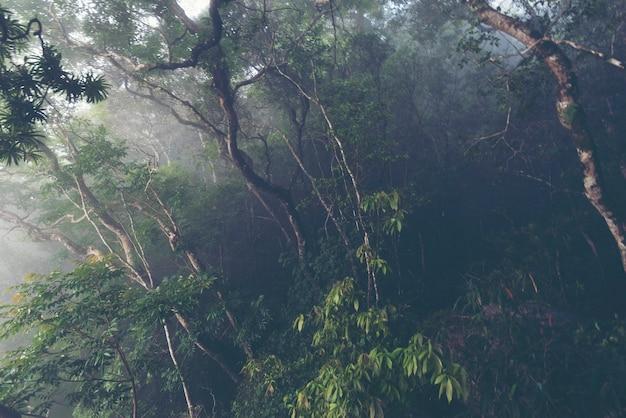 Landschapsmening van tropisch bos in khao yai national park