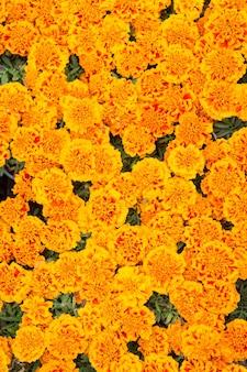 Landschapsontwerp florale achtergrond plantkunde en flora tagetes bovenaanzicht lente natuur concept