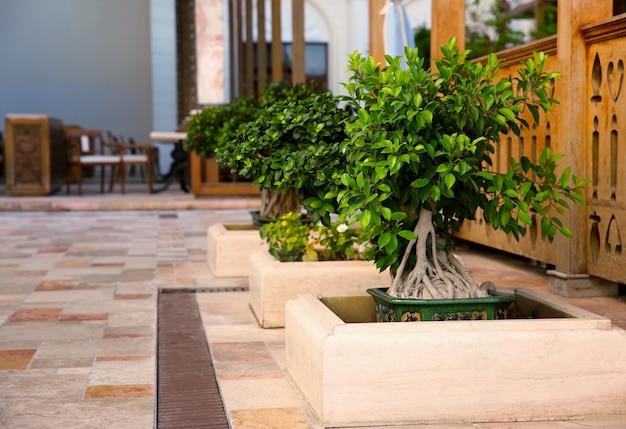 Landschapsontwerp met prachtige bonsaiboom in het resort