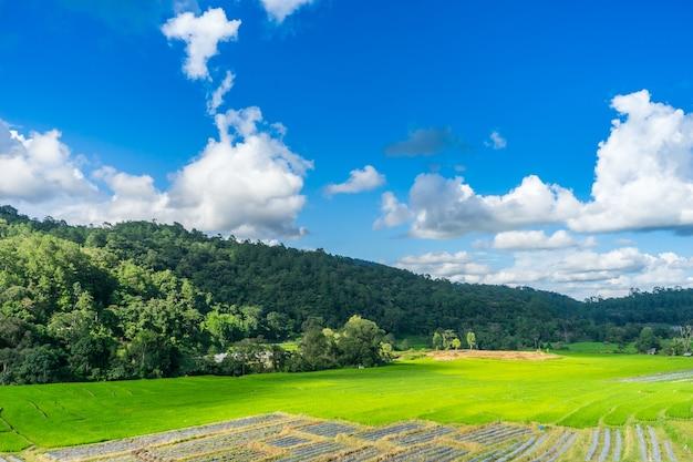 Landschapspadieveld in chiang mai / clound schaduw