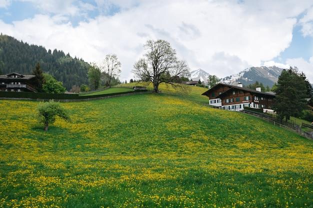 Landschapsvallei met overvloed paardebloemen op zwitserse bergenachtergrond