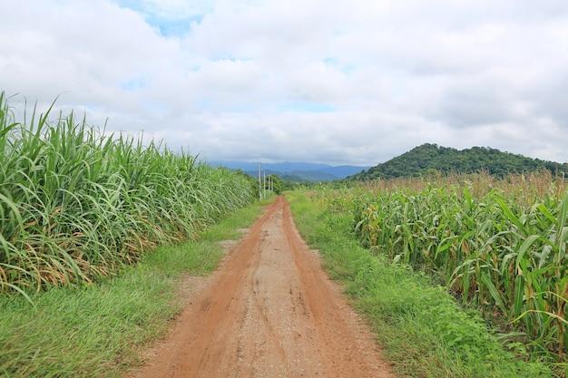 Landweg aan de berg in thailand.