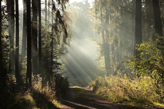 Landweg door het bos op een mistige herfstochtend