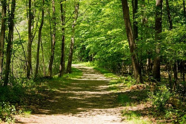 Landweg in het midden van bosbomen op een zonnige dag